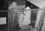 ID #19-60 Hollister Animal Shelter Burglary Suspects