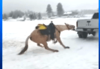 Video of Horse Being Dragged Behind Truck Prompts Investigation