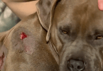 Dog shot with arrows