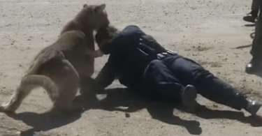 Officer Attacked by Mountain Lion