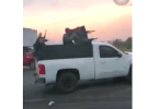 Cartel gunmen in armored truck