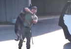 Video of Police Officer Allegedly Abusing His K-9 Prompts Investigation