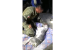 Member of Urban Search and Rescue Team in Mexico tried to resuscitate a dog pulled from rubble.