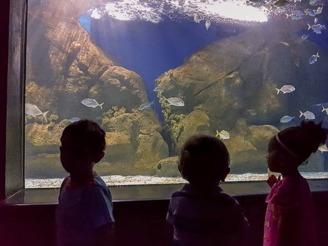 Aquário Marinho do Rio - AquaRio