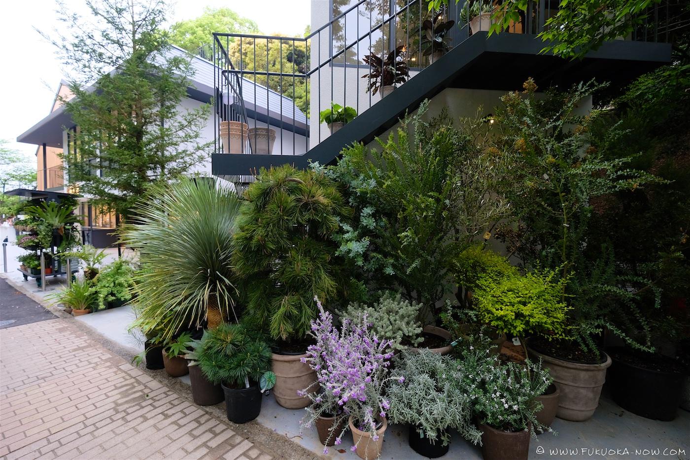 biotop fukuoka, fukuoka, cafe, fashion, botanical