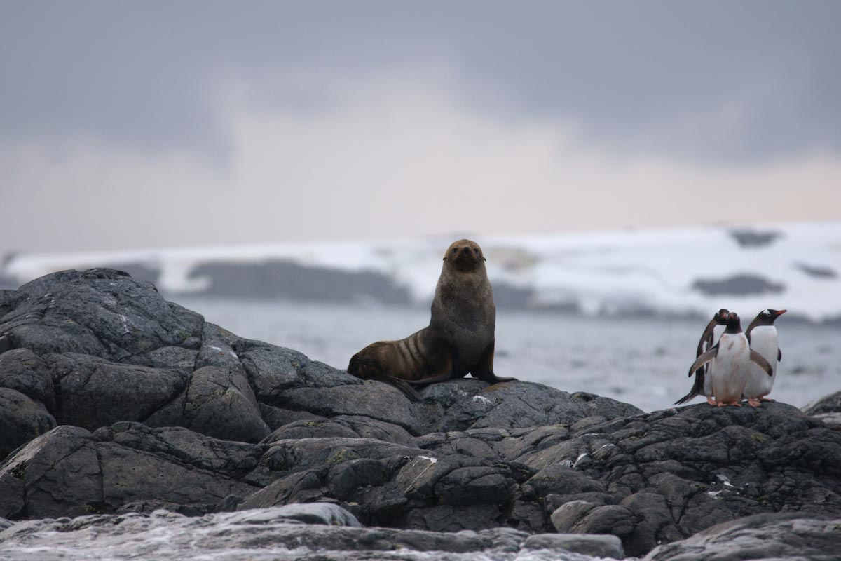 Seal-And-Penguins