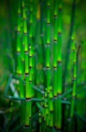 Green Reed by Scott Nelson