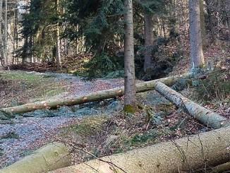 Wald Holz1