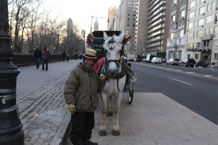 A Central Park horse and his driver