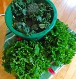 Kale, Broccoli, and Lettuce