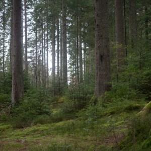 Nature's Orchestra, Scotland Travel Guide
