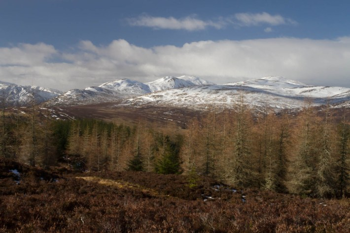 Highland Safaris, Perthshire. Brown heather in the foreground. Bare pine trees and snow capped mountains in the background