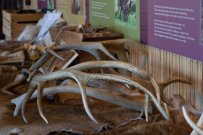 Highland Safaris, Perthshire. A selection of deer antlers in the deer centre