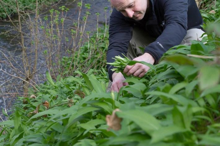 Wild Garlic Pesto Recipe, Scotland, Perthshire