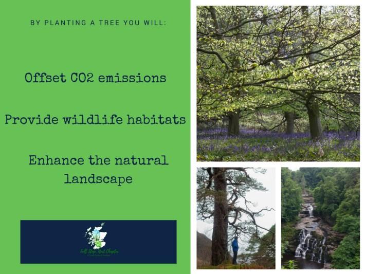 Tree Dedication offset my carbon footprint