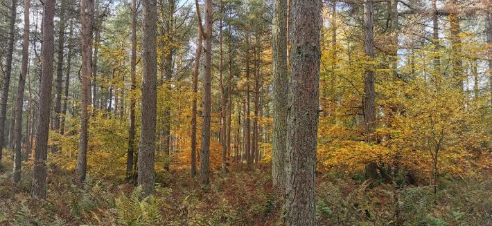Photo of: trees in Autumn