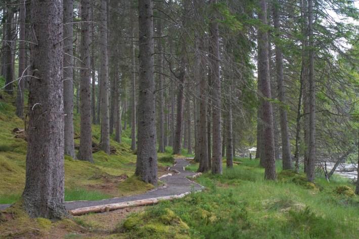 Mar Lodge Estate, Cairngorms. Woodland trail through trees