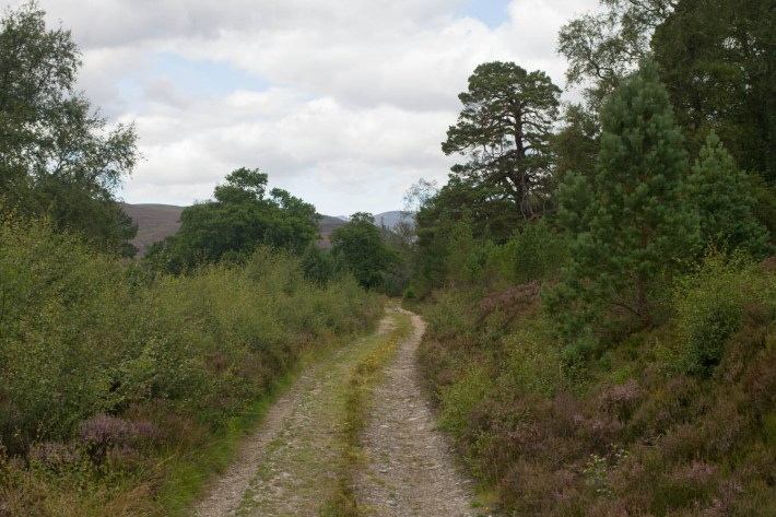 Mar Lodge Estate, Cairngorms. Vehicle track with heather and small trees either side