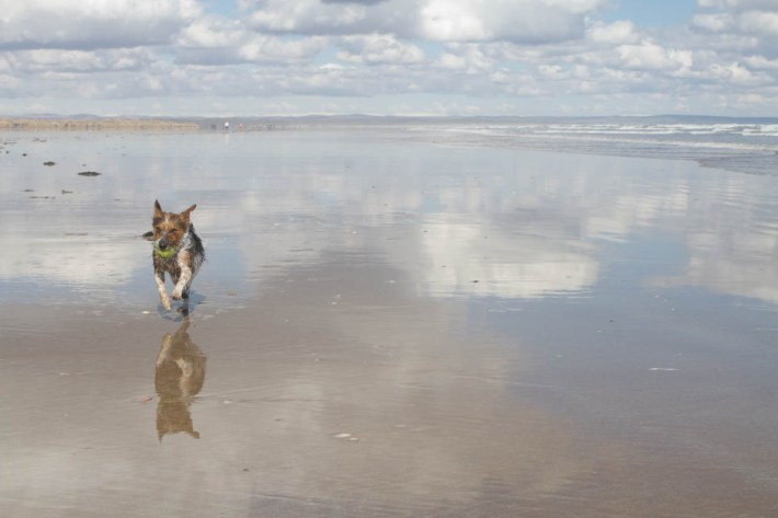 A small dog on the beach with his ball. Reflections on the sand of clouds