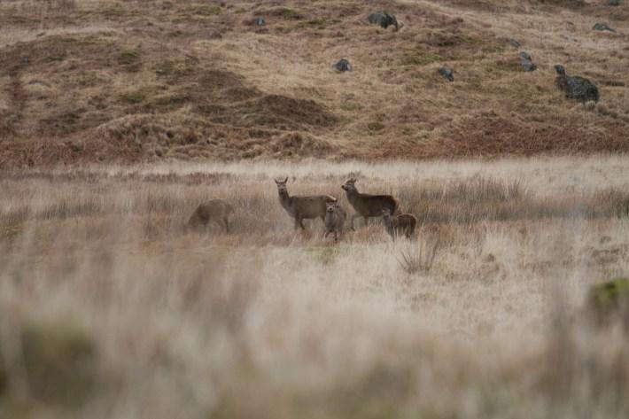 Wildlife in Scotland