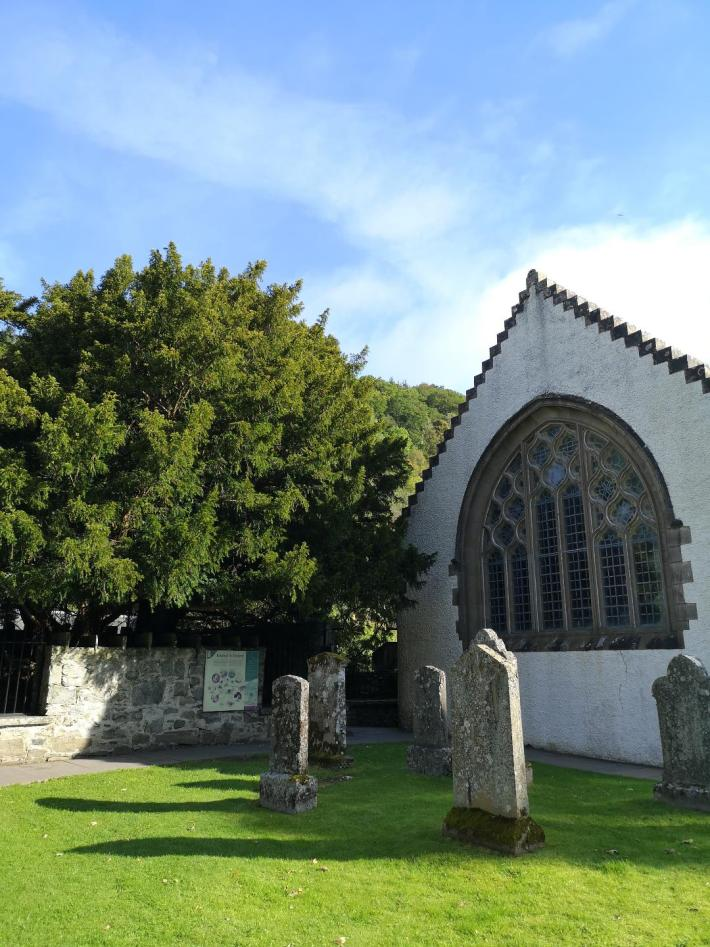 Fortingall Yew, Perthshire