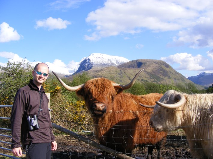 Man stood with heilan coos, Ben Nevis in the background with snow on the top.