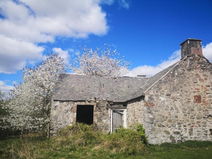 Derelict building in Perthshire alongside a blossom tree - little walks from home during lockdown