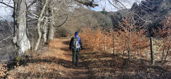 Image of: A male figure walk away from the camera on a woodland trail in Perthshire