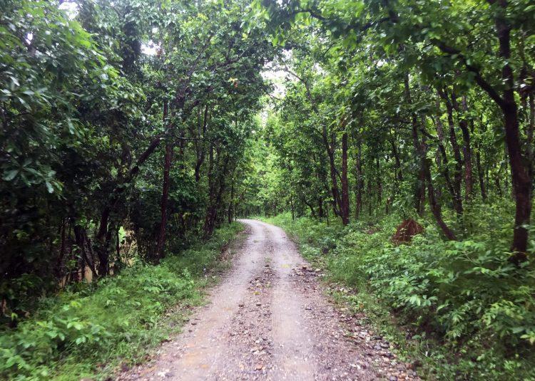 Chitwan National Park on a Budget ⋆ Full Time Explorer
