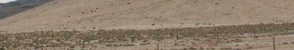 More distant wild horses.