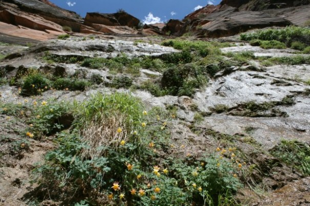 Looking up the shear cliff face and clinging plants, so gorgeous.