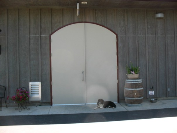 Winery dog, by winery doors