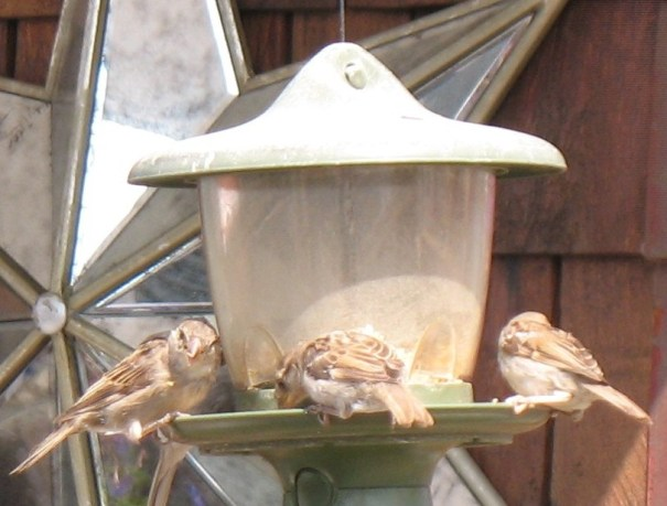 Hungry birds chowing down.