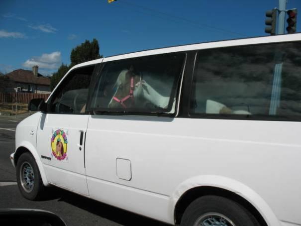 Horse in a minivan.