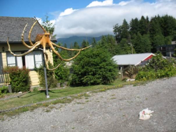 Driftwood Octopus!