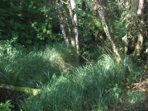 Lush undergrowth, very nice.