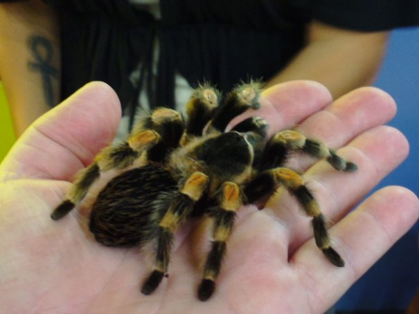 Tarantula in my hand!