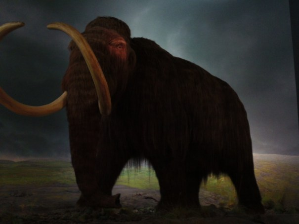 Life size Woolly Mammoth.