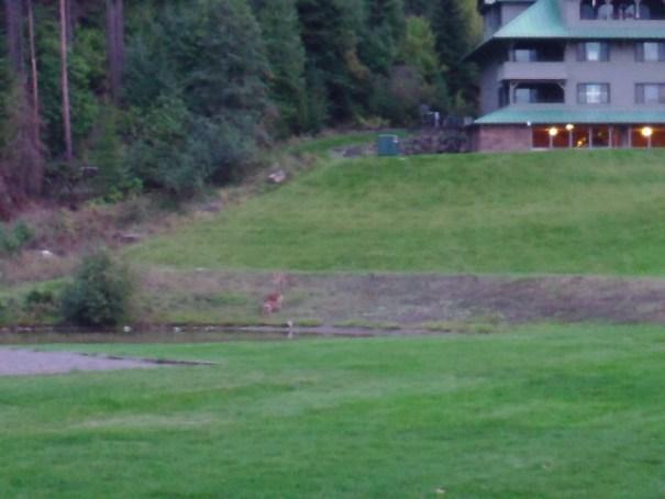 Deer feeding at dusk.