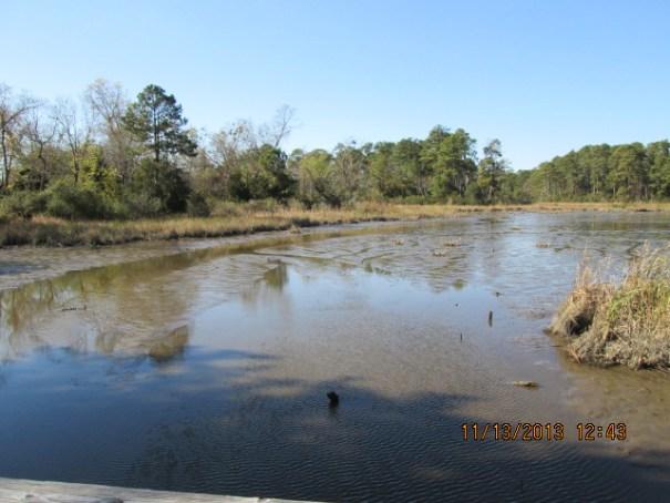Very swampy around here.