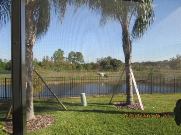 Back yard, lots of anti alligator fencing.
