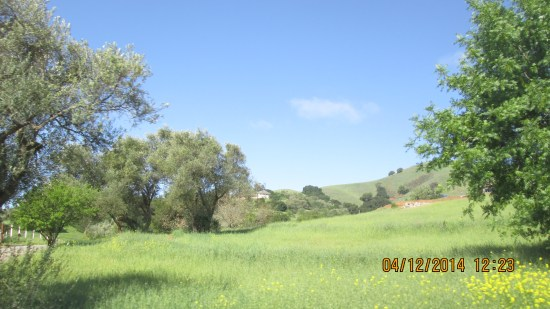We found our beloved California countryside in spring.