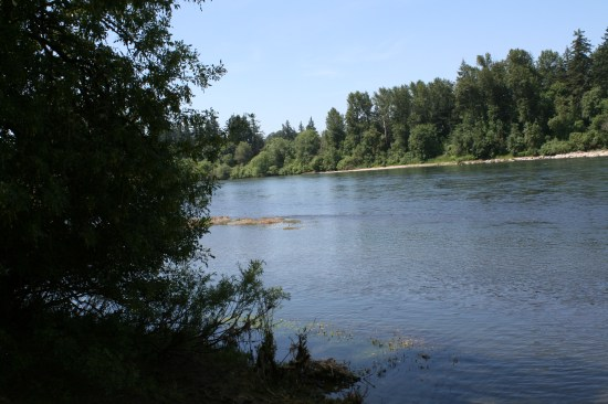 The Willamette River, one of the few that flows north, in the northern hemisphere.