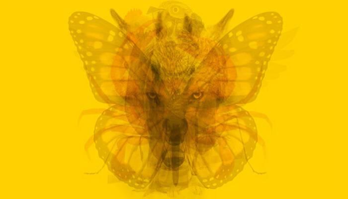 Το Ζώο που βλέπεις πρώτο σε αυτήν την Εικόνα φανερώνει την Αληθινή σου Προσωπικότητα. Εσύ ΠΟΙΟ είδες πρώτο;