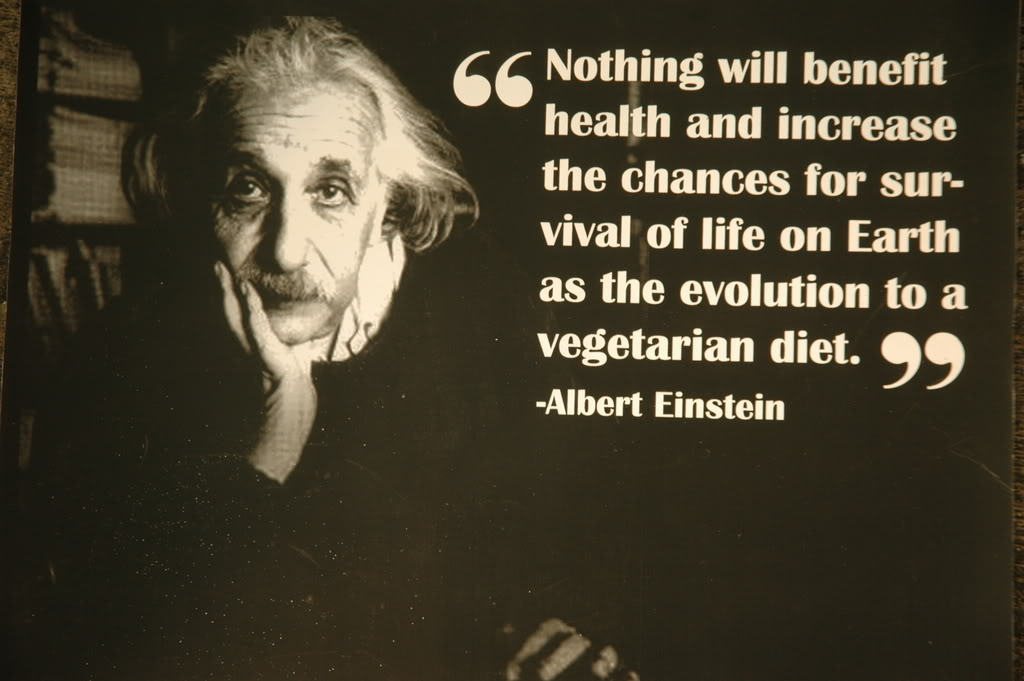Image result for quotes on meat einstein ghandi