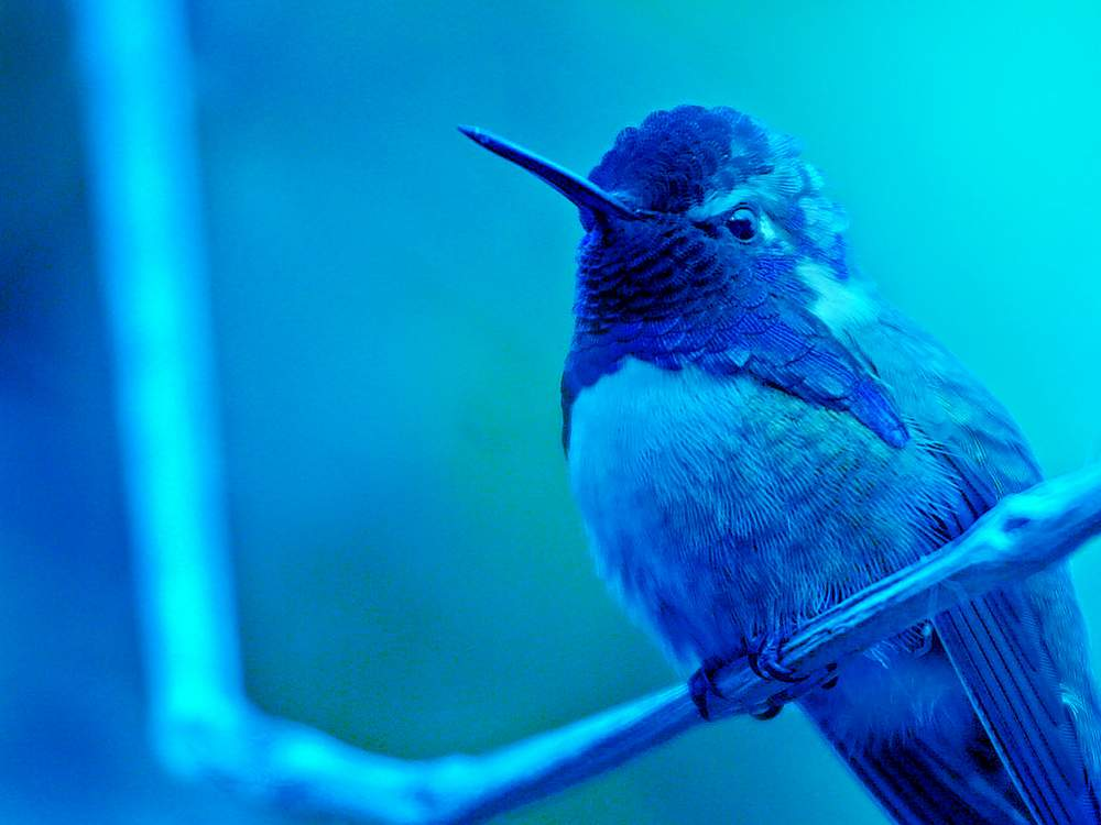 The Most Beautiful Birds Hd Wallpapers And Pictures