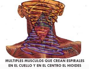 ESPIRALES DEL CUELLO
