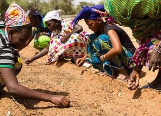 Mujeres senegalesas participan en el proyecto de la Gran Muralla Verde. FOTO: PlayGround