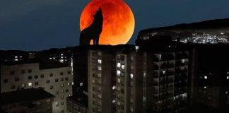 Ladrando a la luna