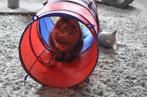 Cat in a tunnel
